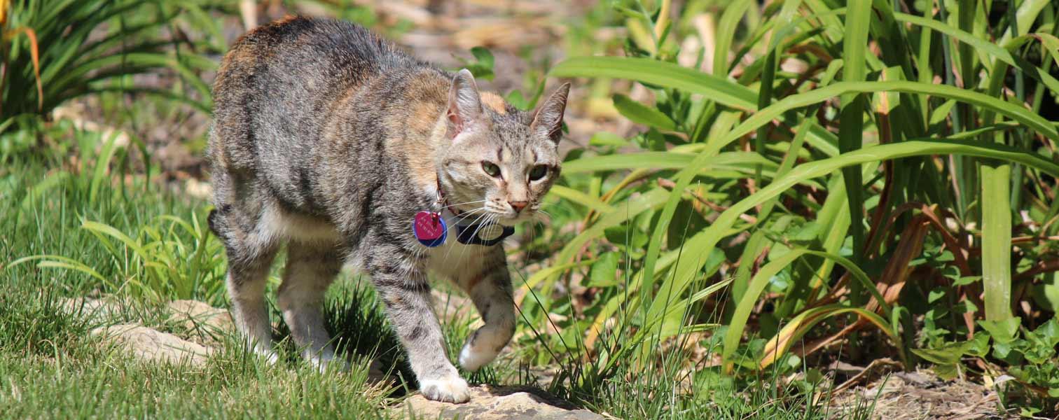 vcl-cat1-600
